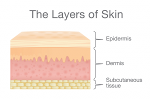layers of the skin threads